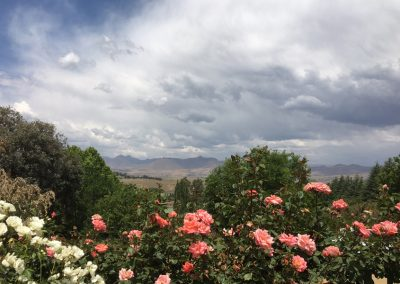 Highland-View-Roses